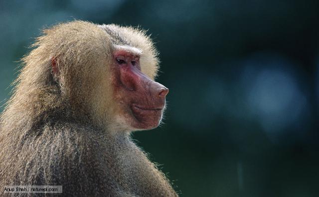 是灵长类动物能够在多种栖息地生