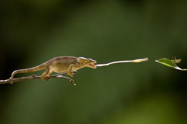 生命脉动:爬虫与两栖类